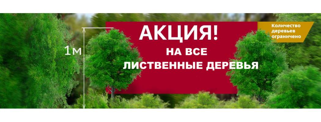 Акция на все хвойные деревья