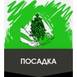 Городской центр по благоустройству и озеленению