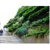 Вертикальное озеленение домов склонов скверов парков в алматы