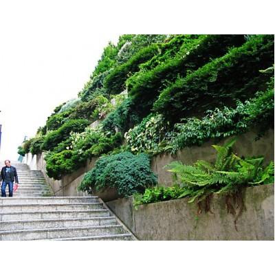 Вертикальное озеленение в Алматы Фитостены создание вертикального сада PLANTS