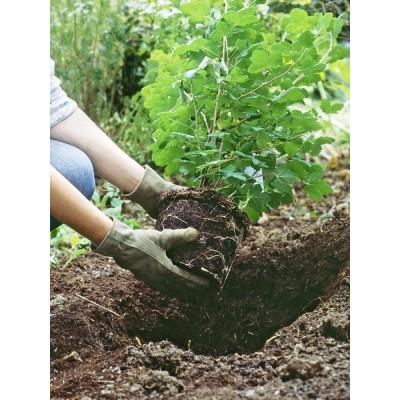 Услуги по посадке многолетних растений в алматы создание клумб.