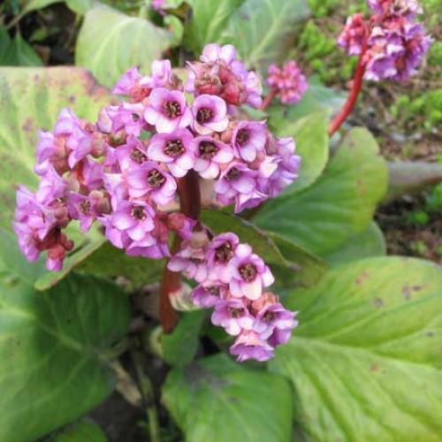 Где купить многолетние цветы из питомников как заказать цветы и семена